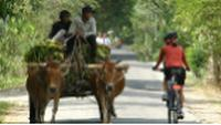 Cycling on the backroads on the Adventure South Mekong Delta tour, Vietnam |  <i>Adventure South</i>