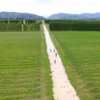 Cycling through Pasquale Kurow Winery | Daniel Thour
