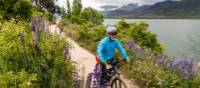 Cycling lakeside on the Alps to Ocean trail | Lachlan Gardiner