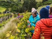 Visit to the Clyde Village Vineyard |  <i>Lachlan Gardiner</i>