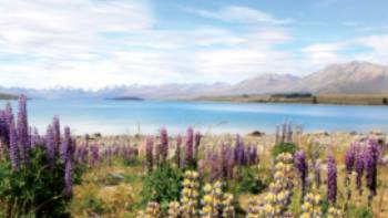 Verdant landscape overlooking Lake Tekapo New Zealand | Learna Cale
