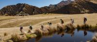 Tussock lands and Tarns of Ben Lomond Station | Colin Monteath
