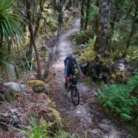 Flowing singletrack through west coast bush   Sandra Appleby