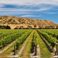 Panorama of Awatere vineyards   Colin Monteath